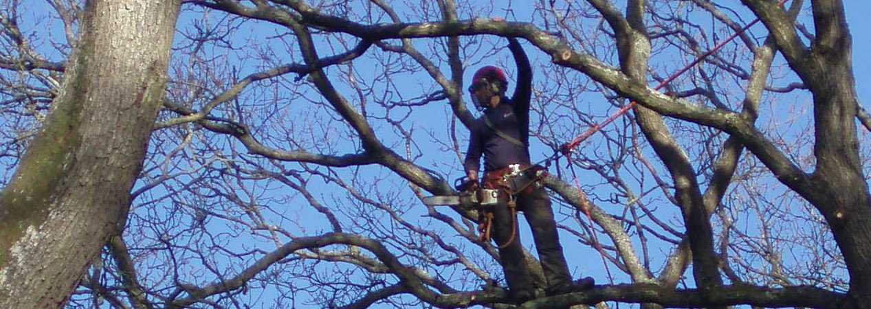 Tree Surgeon North London: LG Trees in Stoke Newington, N16