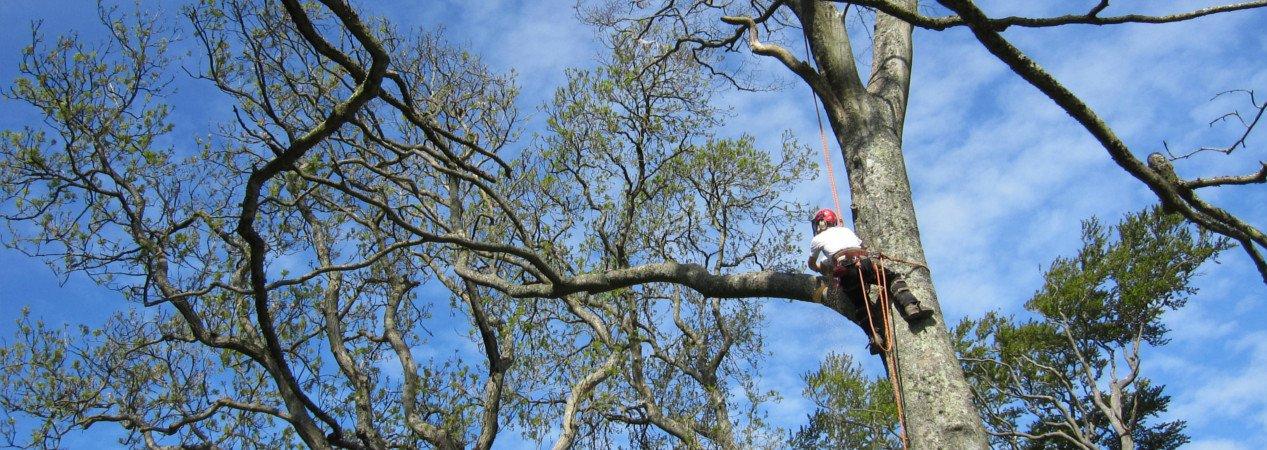 Tree Surgeon North London: LG Trees in Stoke Newington, N16