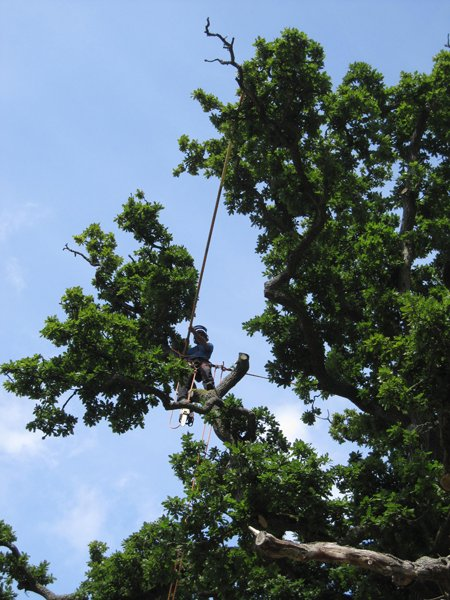 Camden tree surgery