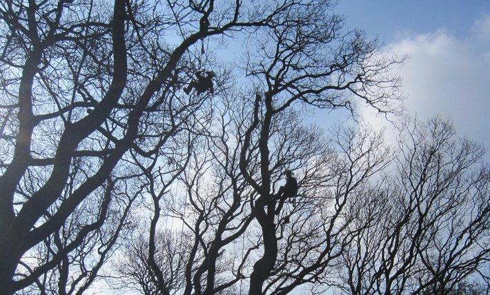 Two Islington tree surgeons at work