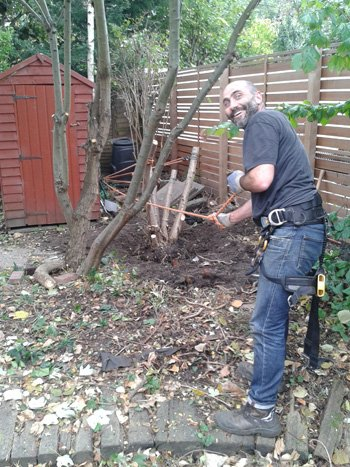 Hazel tree and stump removal