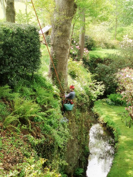 North London tree surgeon garden maintenance