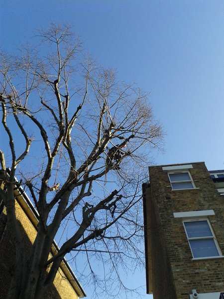 Tree surgery: using two redirects and five pulleys in a big lime tree