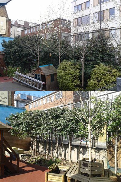 Before and after tree work at a playground.