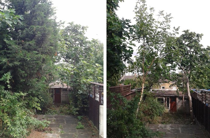 Photos of a garden before and after removing cypress trees.