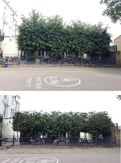 Reducing lime trees